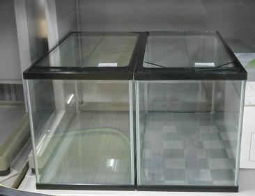 P6090055
